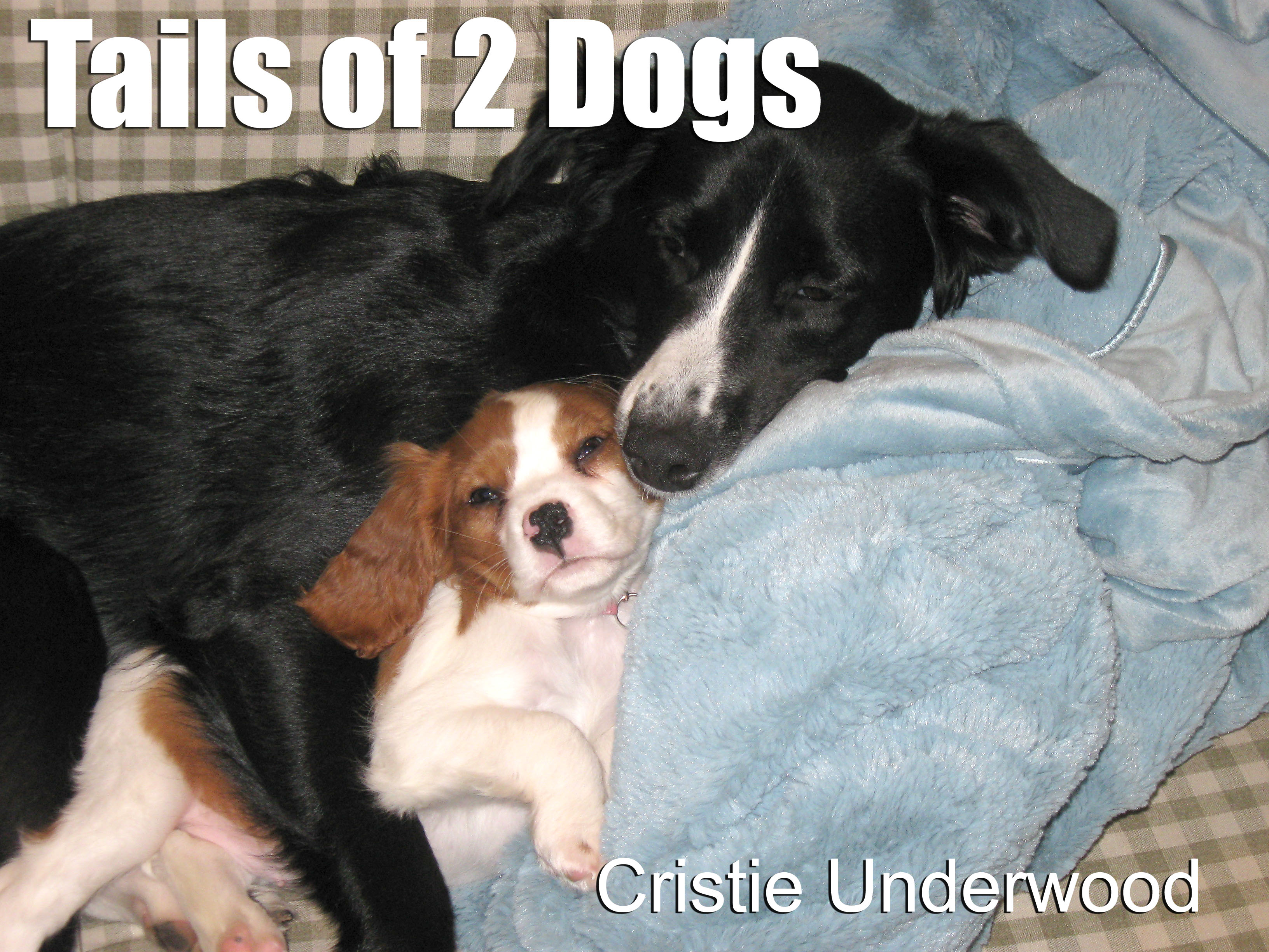 Tails of 2 Dogs blog